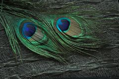 Fabric and peacock feathers Royalty Free Stock Photos
