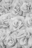 Fabric pink rose. Background in black and white Stock Images