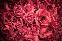 Fabric pink rose Royalty Free Stock Photography
