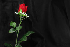 Fabric Rose on Black Stock Photography