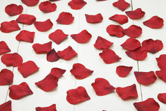 Fabric rose petals on white wooden floorboards Stock Photography