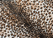 The fabric on striped leopard. On background Stock Photos