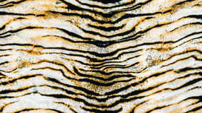 The fabric on striped tiger. On background Stock Image