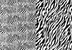 The fabric on striped zebra Stock Image