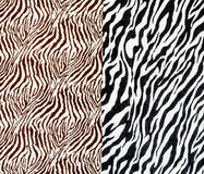 The fabric on striped zebra Stock Photography