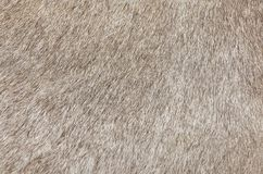 Detail of A Skin of A Cow Texture Background. Fabric Textile, Close Up of Brown Cowhide or Fragment of Skin A Cow Texture Background Royalty Free Stock Photo