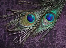 Fabric and two peacock feathers stock photo