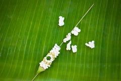 Fabricación de la cesta flotante por la hoja del plátano, krathong para Loy Kratong Imágenes de archivo libres de regalías