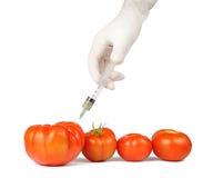 Fabricación de los tomates grandes Fotografía de archivo libre de regalías
