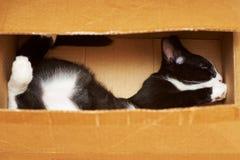 Fabricación de un gato divertido Fotografía de archivo