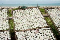 Fabricación del calamar secado Fotos de archivo