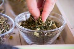 Fabricación del juego de té de la infusión del Manzanilla-estragón Imagen de archivo libre de regalías
