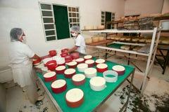Fabricación del queso artesanal Foto de archivo