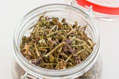 Fabricación del té verde con el sistema del ginseng y del sabio Fotografía de archivo libre de regalías