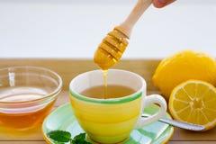 Fabricación del té verde con el sistema del ginseng y del sabio Imágenes de archivo libres de regalías