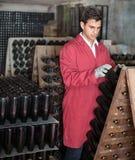 Fabricante do vinho que toma de garrafas do tempero Fotografia de Stock Royalty Free