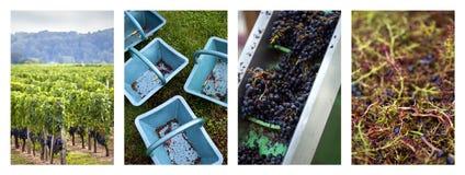Fabrication de la première étape de vin Photos stock