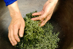 Fabrication de thé Images libres de droits