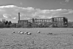 Fabriek en schapen Stock Foto's