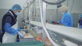 Fabrikeinheit mit den Leisten von den Forellen, die gehackt von den Arbeitskräften erhalten stock video footage