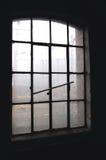 fabriksfönster arkivfoto