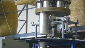 Fabryczna produkcja słodkiej kukurudzy kije zbiory wideo