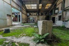fabryczny budynek z paprociÄ… i mech zdjęcie stock