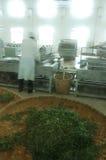 fabryki herbata zielona przerobowa Zdjęcia Stock