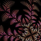 Fabulous asymmetrical pattern of the leaves on black background. Stock Photography