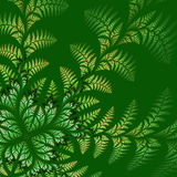 Fabulous asymmetrical pattern of the leaves on green background. Stock Images