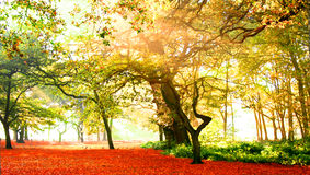 Fabulous autumn forest Royalty Free Stock Photo