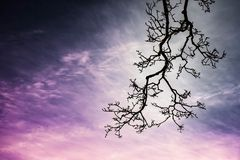 Fabulous background picture with purple sky and branch of tree stock photo