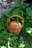 Fabulous basket with bread roll in the forest Royalty Free Stock Image