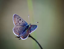 Fabulous beautiful butterfly Stock Photo