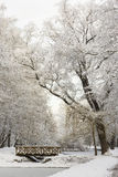 Fabulous beautiful landscape winter snowy park forest. Royalty Free Stock Photo