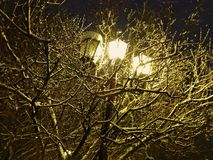 The street lamp illuminates the tree covered with snow Stock Images
