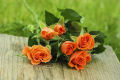 Fabulous bouquet of colorful roses Royalty Free Stock Image