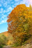 Fabulous colors in the autumn forest on a sunny day harmony, re Stock Photography