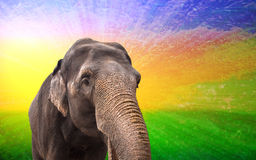 Fabulous elephant Royalty Free Stock Photo