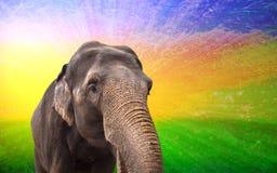 Fabulous elephant Royalty Free Stock Photo