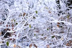 Fabulous hoarfrost on the trees Royalty Free Stock Photos
