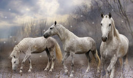Fabulous horse. S in the foggy forest Royalty Free Stock Images