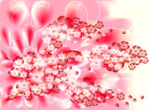 Fabulous illustration of an abstract branch of a cherry blossom on a pink background.  Stock Image