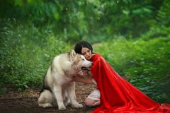 Fabulous image, dark-haired brunette attractive lady in short white dress, long red scarlet cloak lying on ground sits. Beside Alaskan Malamute like wolf royalty free stock images