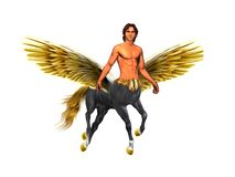 Fabulous image. Pegasus - centaur man with gold wings on the white background . stock photos