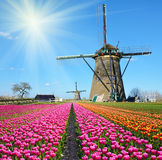 Fabulous landscape of Mill wind and tulips in Holland on a sunny Stock Photos