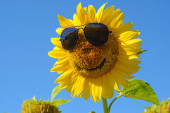 Fabulous landscape of sunflower with and face with a smile and s Royalty Free Stock Photography