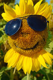 Fabulous landscape of sunflower with and face with a smile and s Royalty Free Stock Photo