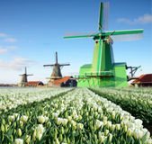 Fabulous landscape with tulips and aerial mill on the channel in Royalty Free Stock Photography