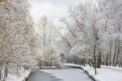 Fabulous landscape of winter forest. Frozen pond Stock Images